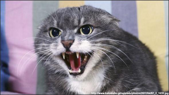 Почему коты нападают на кошек