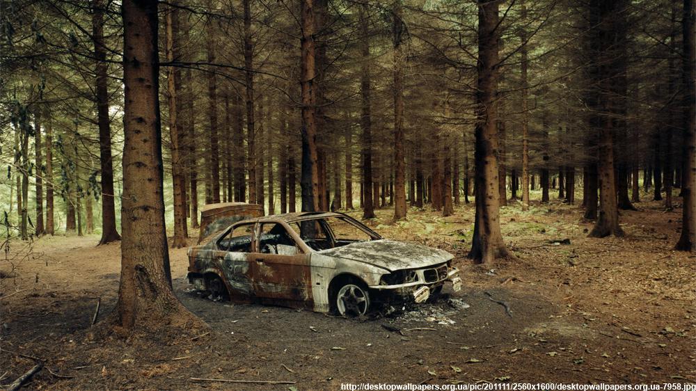 Влесу найдена сгоревшая машина смосковскими номерами итрупами 2-х людей
