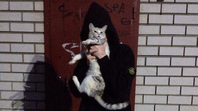 Живодеры изВладимира, убившие котенка, избежали уголовной ответственности