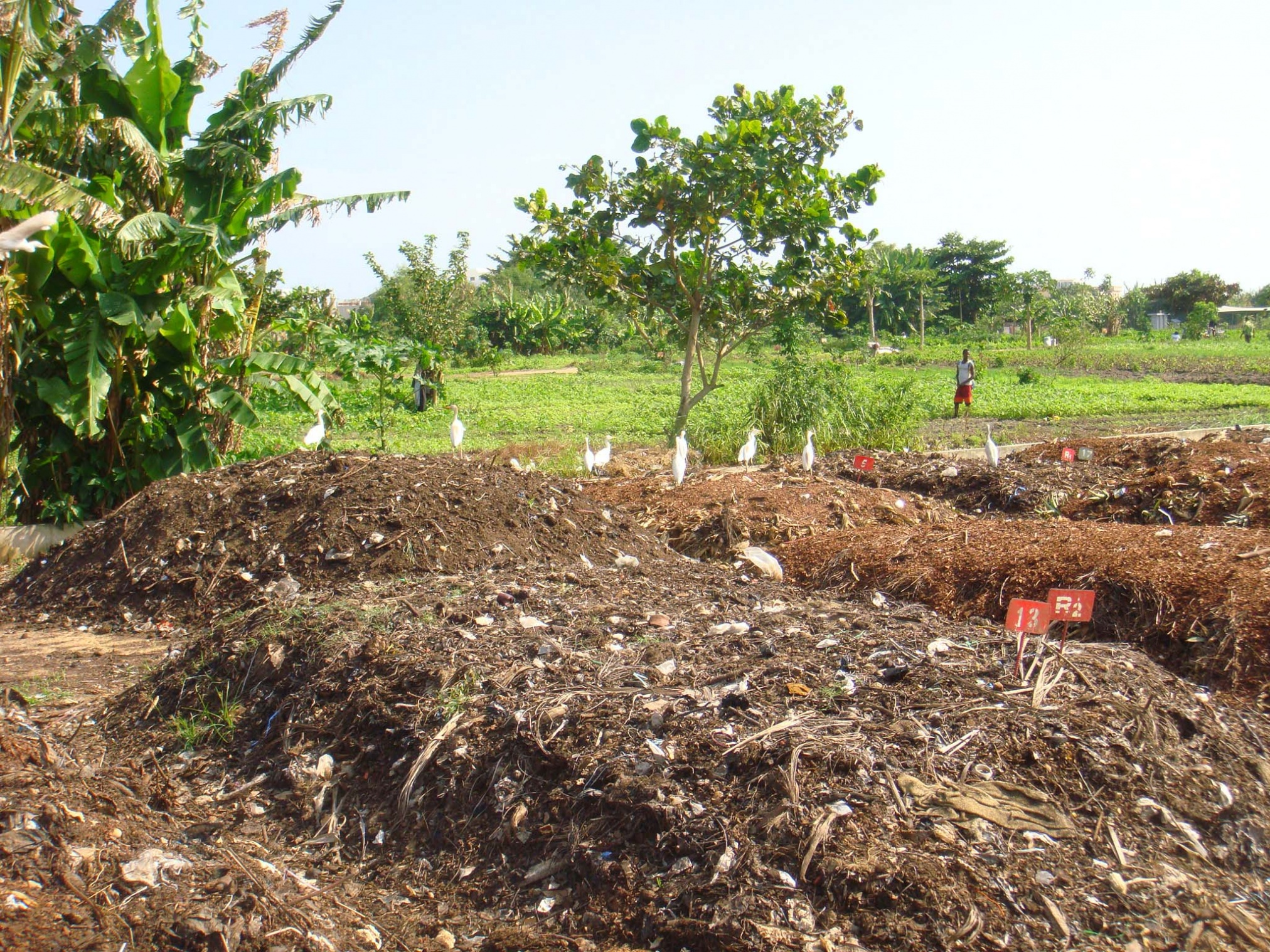 Compost_before_sifting_(there_is_other_material_in_it_for_example_plastic_waste)._(5817733310).jpg